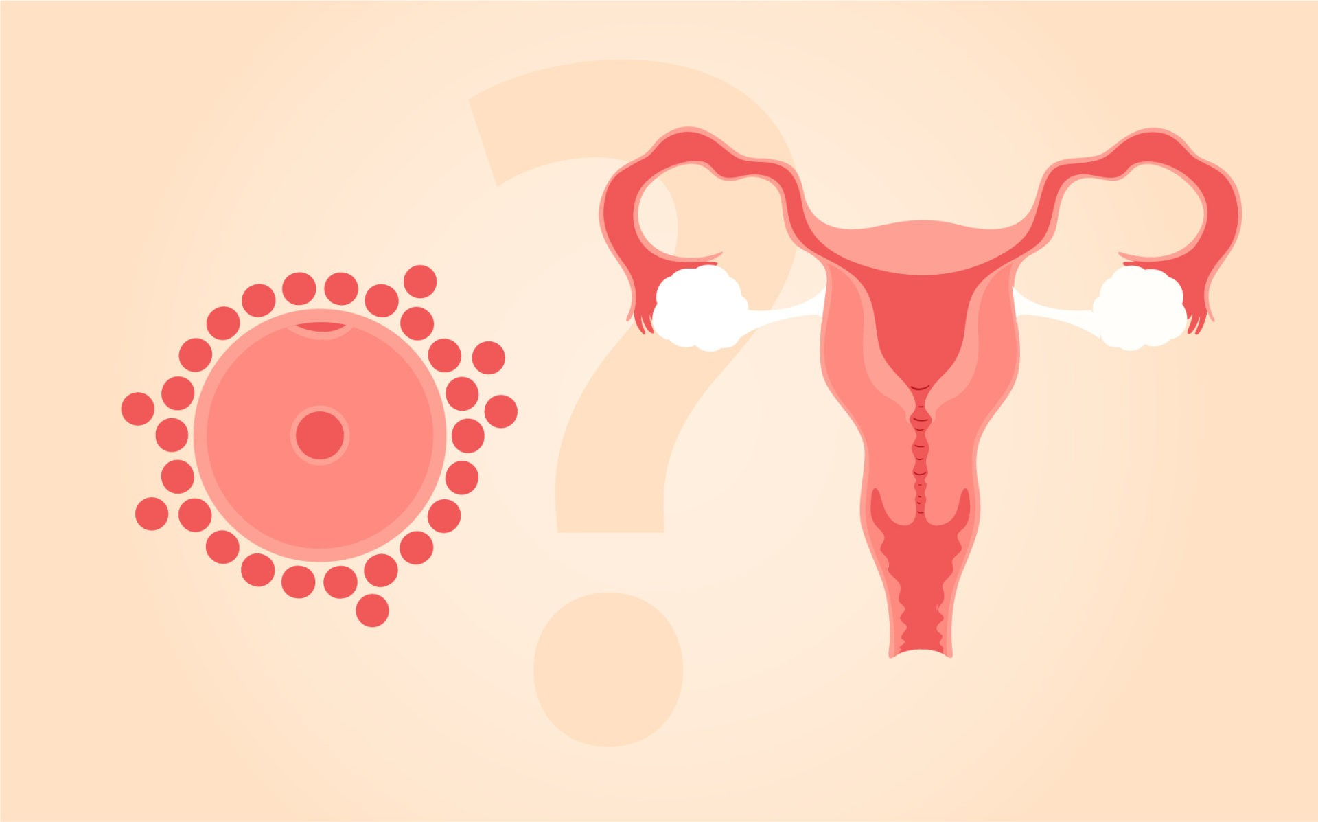 Young Eggs vs. Young Uterus: What's More Important for IVF Success?